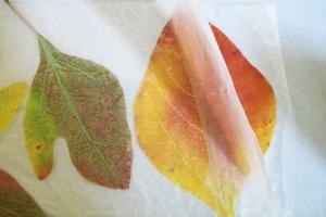 leaves_preservation_DIY_4